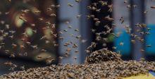 حين يُقفل النحل ساحة تايمز سكوير في نيويورك