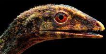 التيروصورات تطير في وقت تزحف الدينوصورات