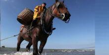صيد السمك في بلجيكا بواسطة الخيول