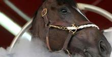 دبي تستخدم تكنولوجيا التبريد لعلاج الخيول في خطوة سبّاقة