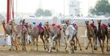 جوائز قيّمة تنتظرك في مهرجان سلطان بن زايد