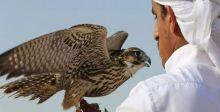 تحديثٌ اماراتيّ في تحدي تلقيف الصقارة