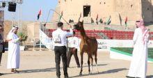 الفجيرة ترعى أجمل الخيول العربية
